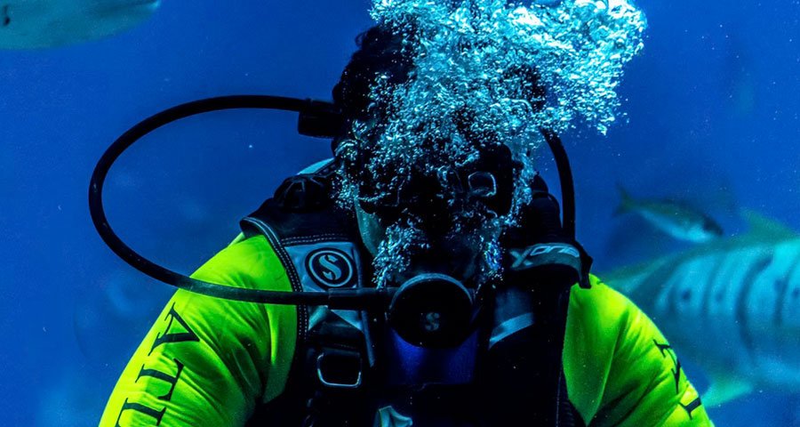 Featured image The Correct Scuba Diving Gear - The Correct Scuba Diving Gear